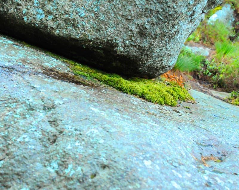 Mousse et roche photos libres de droits