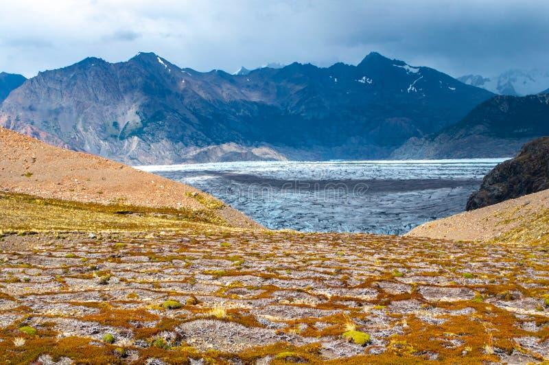 Mousse herbe et glace dans le Patagonia dans les sud de l'Argentine photographie stock libre de droits