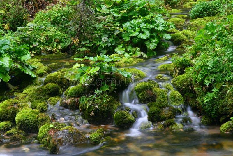 Mousse sur des roches de fleuve photographie stock