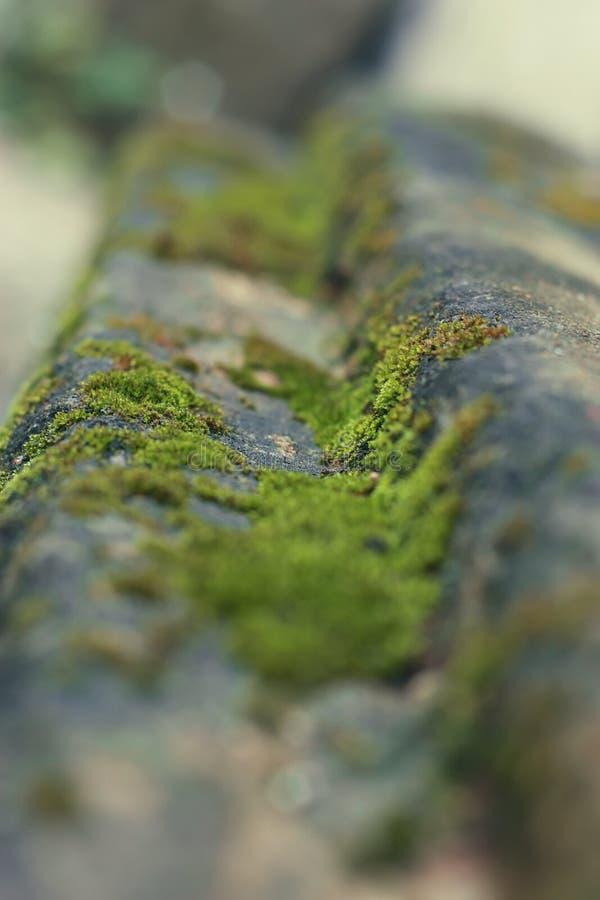 Mousse sur la pierre photo stock