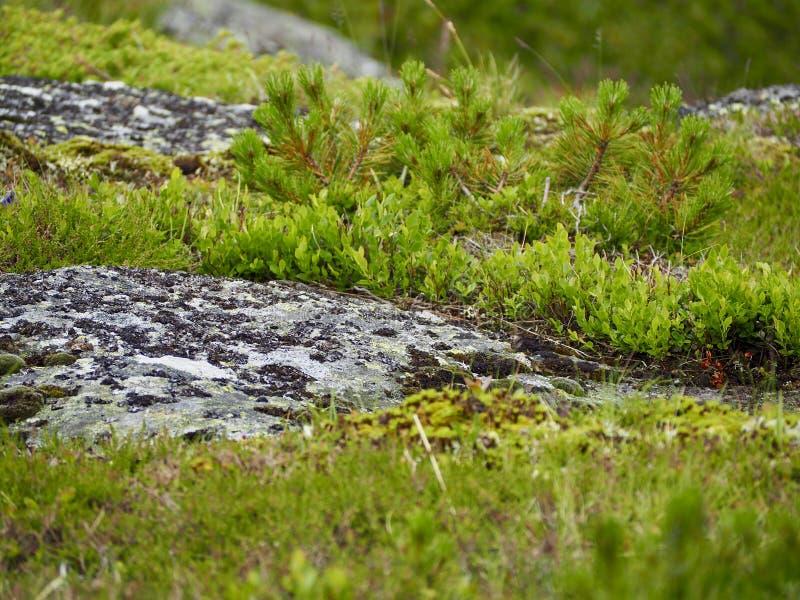 Mousse sur la roche images stock