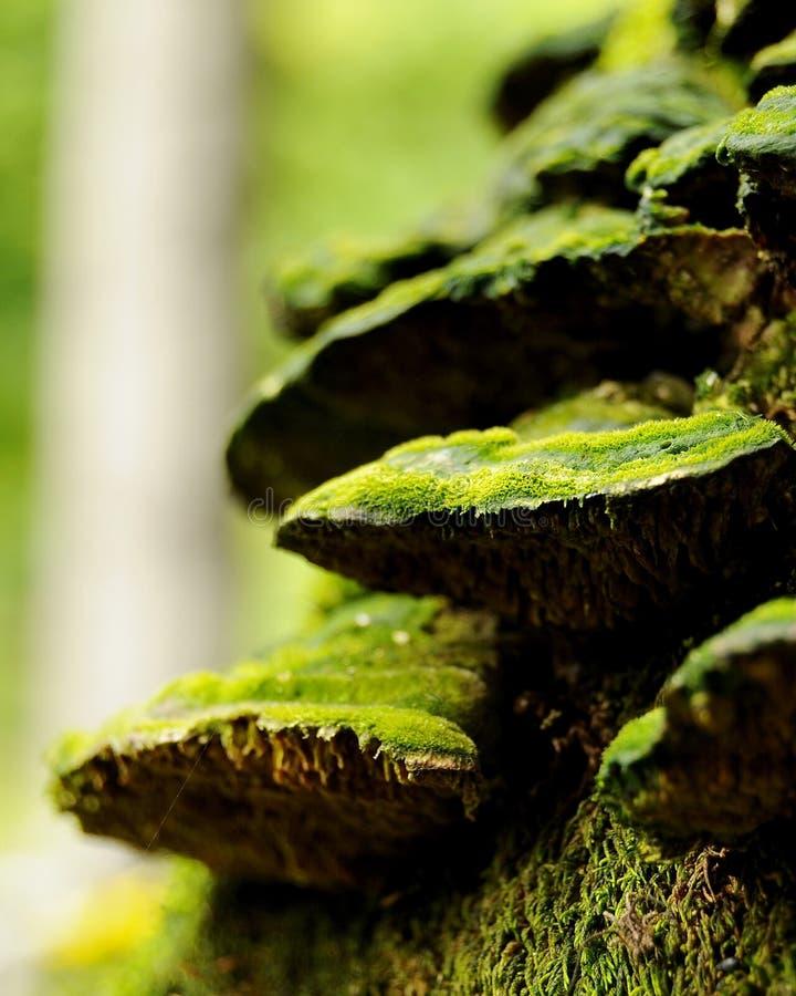 Mousse sur le bois mort photos libres de droits