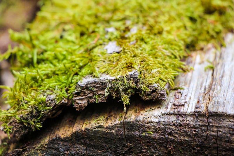 Mousse sur le joncteur réseau d'arbre photographie stock libre de droits