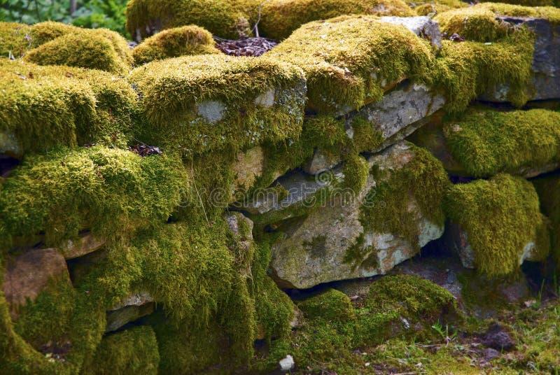Mousse sur le mur en pierre photo stock image du - Enlever la mousse sur un mur exterieur ...