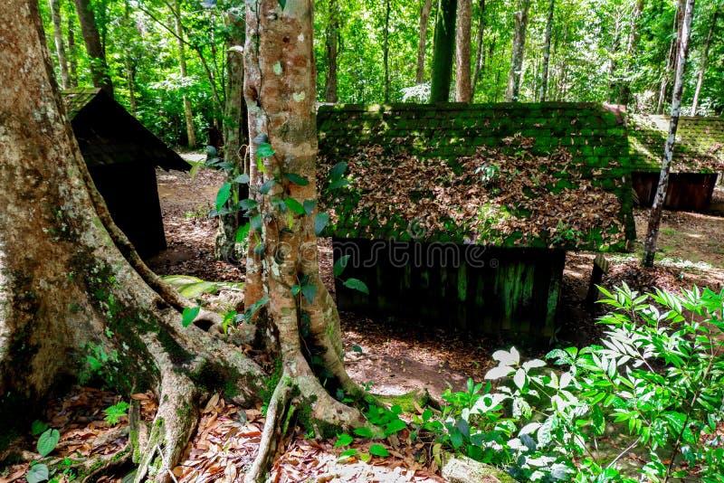 Mousse sur le toit de cottage au parc national de Phu Hin Rong Kla photographie stock