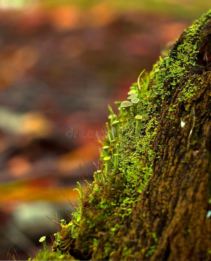 Mousse sur le tronc d'un vieil arbre images stock