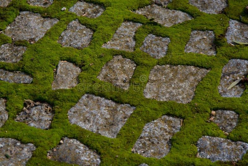 Download Mousse sur le trottoir image stock. Image du mousse, granit - 8654293