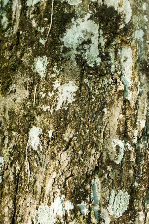 Mousse sur un tronc d'arbre photos libres de droits