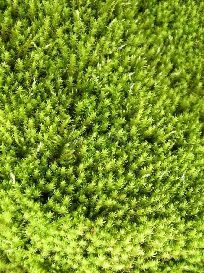 mousse verte image stock image du doux nature beau 10949003. Black Bedroom Furniture Sets. Home Design Ideas