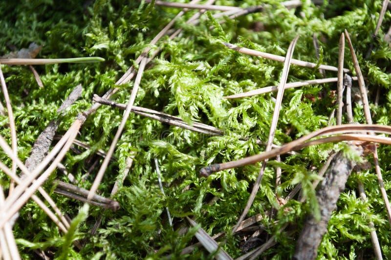 Download Mousse verte de forêt photo stock. Image du sapin, vieux - 77152844