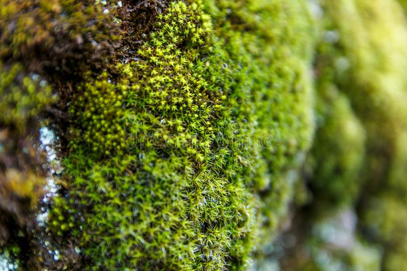 Mousse verte fraîche sur les montagnes images stock