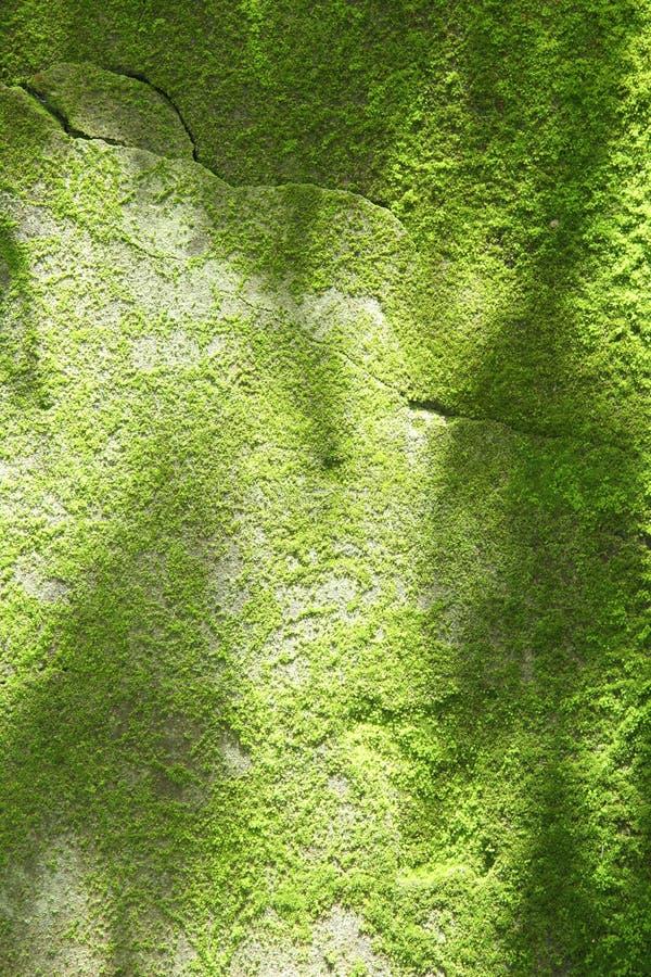 Mousse verte naturelle images libres de droits