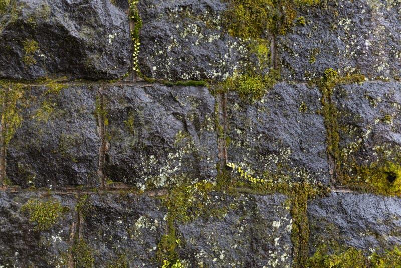 Mousse verte sur le mur de bloc de béton dans le jour pluvieux photo stock