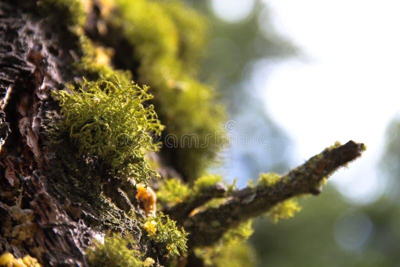 Mousse verte sur le tronc d'arbre 2 photo stock