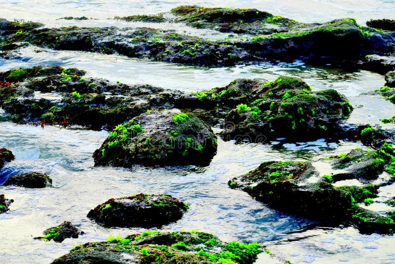 Mousse verte sur les roches d'une plage photo libre de droits