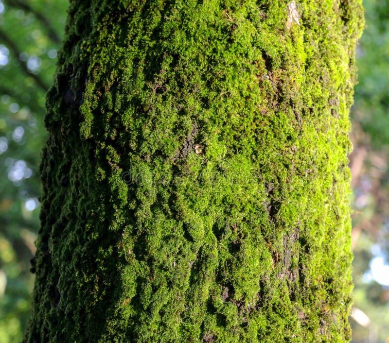 Mousse verte sur un arbre en parc d'été photographie stock