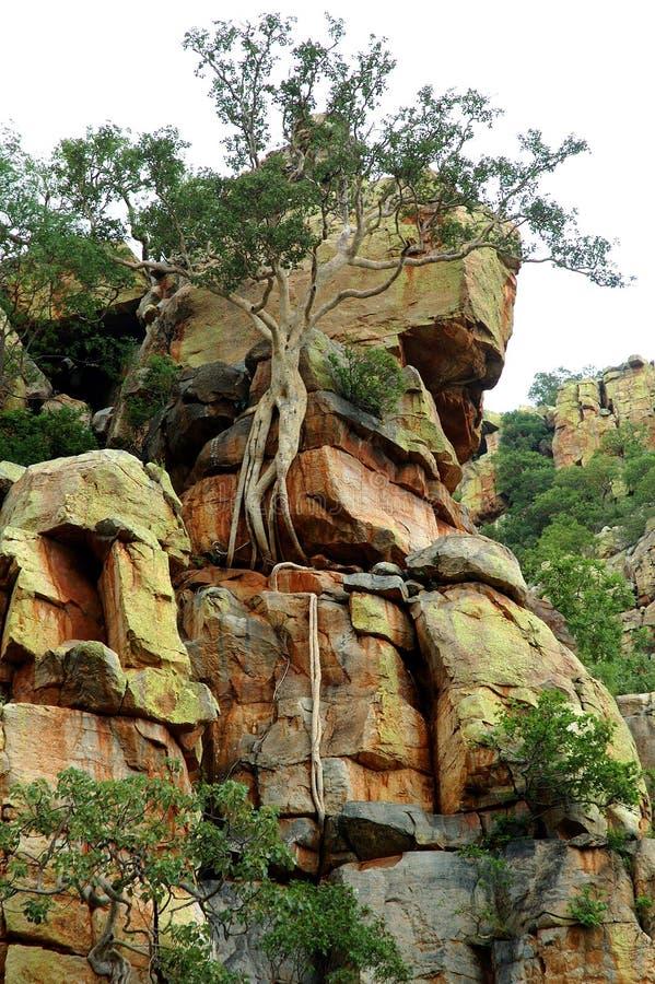 Download Moutain смоквы стоковое фото. изображение насчитывающей гора - 483794