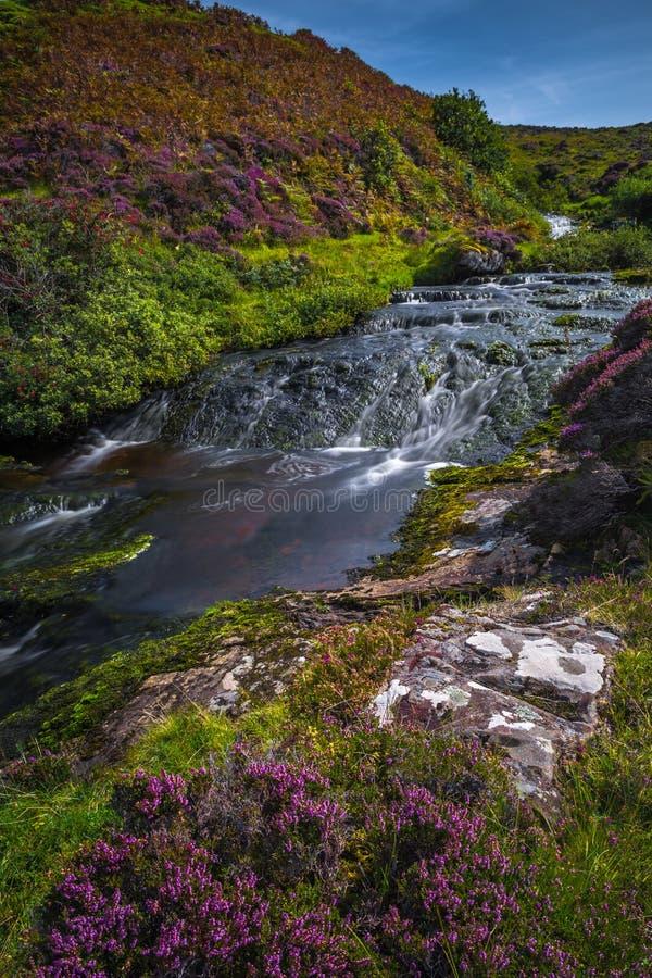 Moutain rzeka Z Kaskadową siklawą W Scenicznej dolinie Z kwiatami Na wyspie Skye W Szkocja fotografia stock