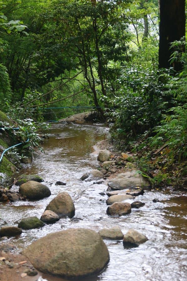 Moutain strumień zdjęcie stock