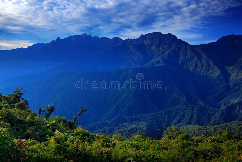 Moutain tropisk skog med blå himmel och moln, Tatama nationalpark, höga Anderna berg av Cordilleraen, Colombia royaltyfri foto