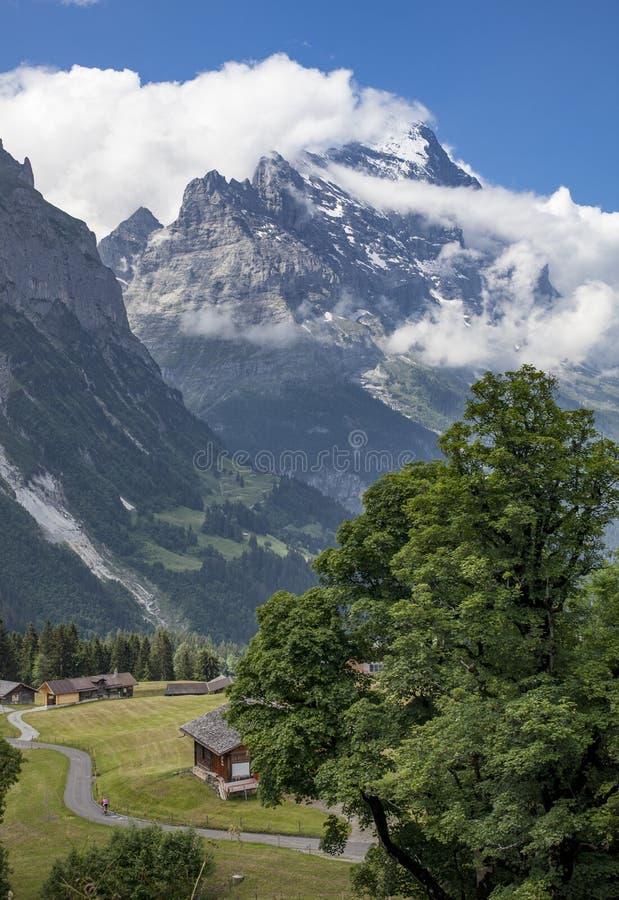 Moutainbiking i Grindelwald, Schweiz arkivfoto