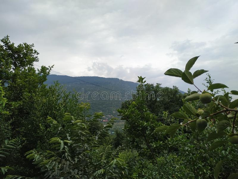 Moutains, plantas y nubes en el cielo fotografía de archivo libre de regalías