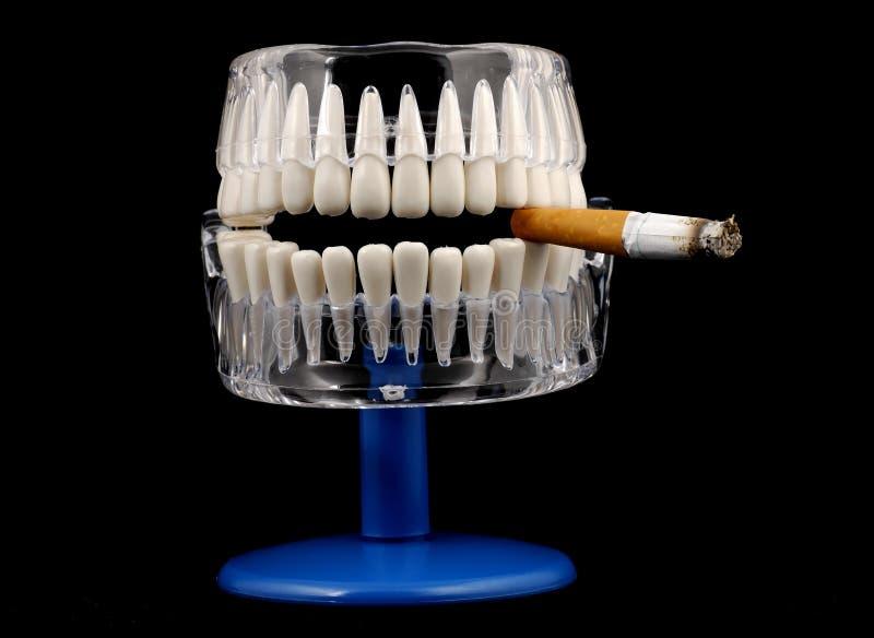 Download Mouth Model stock photo. Image of anatomy, warning, dental - 452184