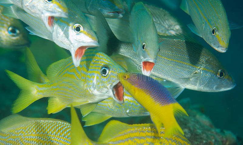 Download Mouths Wide Open stock photo. Image of ichthyology, ocean - 23763900