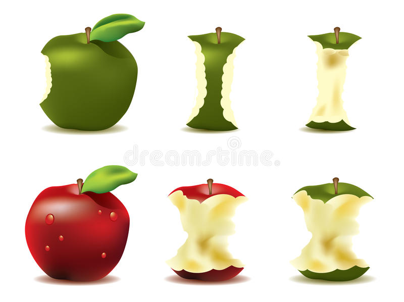 Download Mouthwatering fresh apple stock vector. Illustration of crop - 17699069