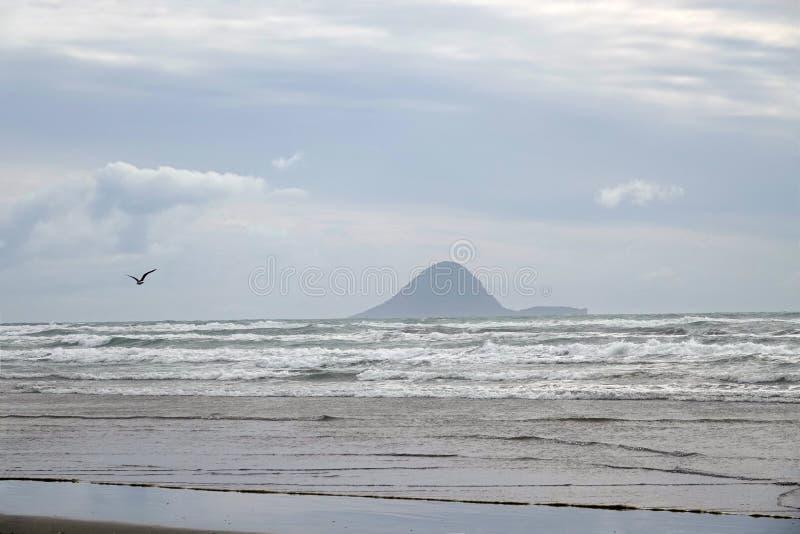 Moutohora lub Wielorybia wyspa od Ohope plaży w Whakatane, Nowa Zelandia obrazy stock