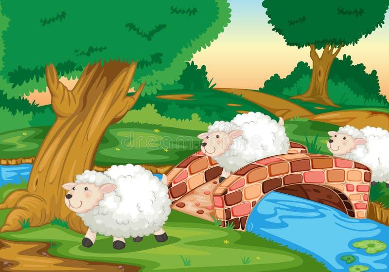 Moutons illustration de vecteur