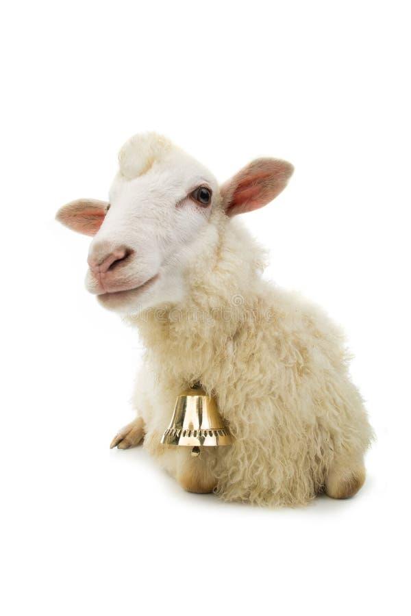 Moutons avec la cloche photos stock