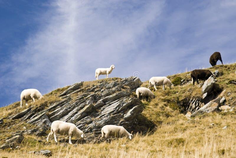 Moutons dans la montagne photographie stock