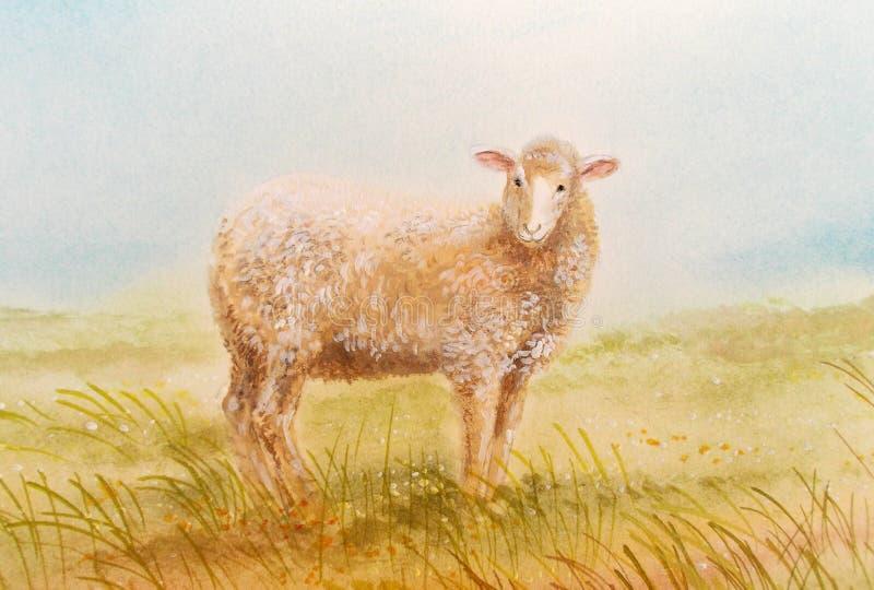 Moutons dans le pré images stock