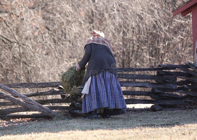 Moutons de alimentation de femme pionnière par une barrière de rail fendu photographie stock