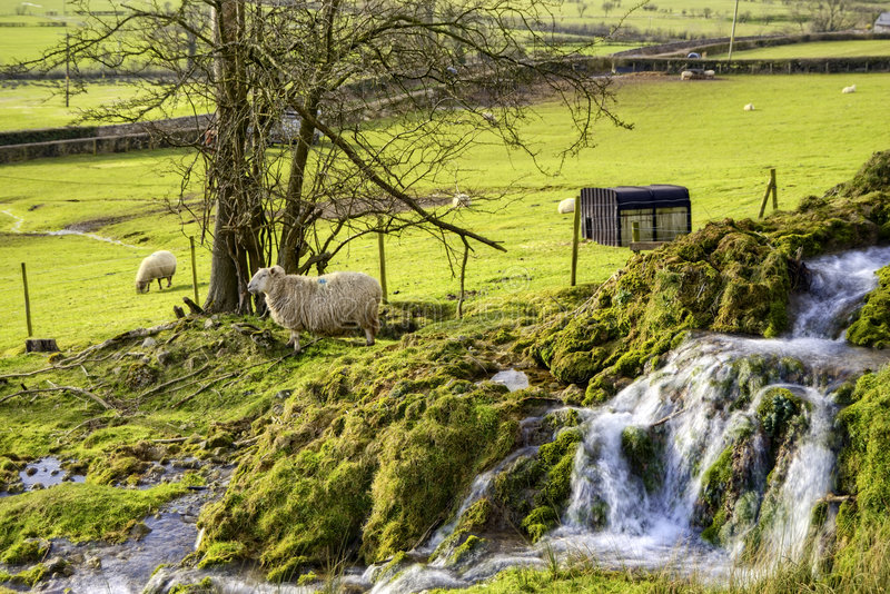 Download Moutons de campagne photo stock. Image du outdoors, ruisseau - 8651364