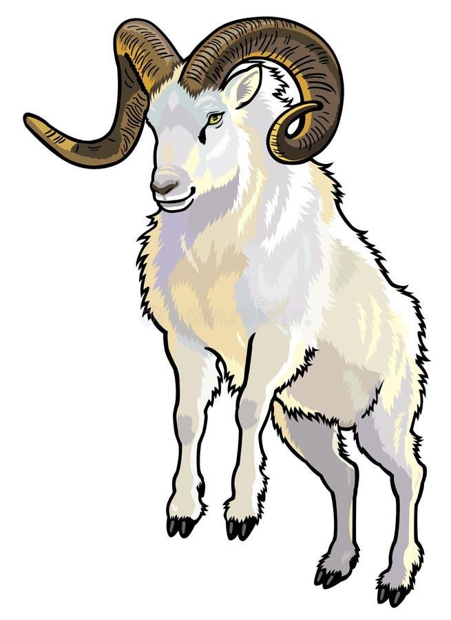 Moutons de Dall illustration de vecteur