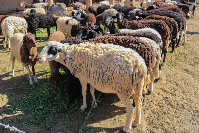 Moutons de laine à vendre photographie stock libre de droits