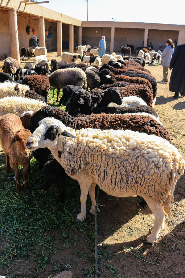 Moutons de laine à vendre photos libres de droits