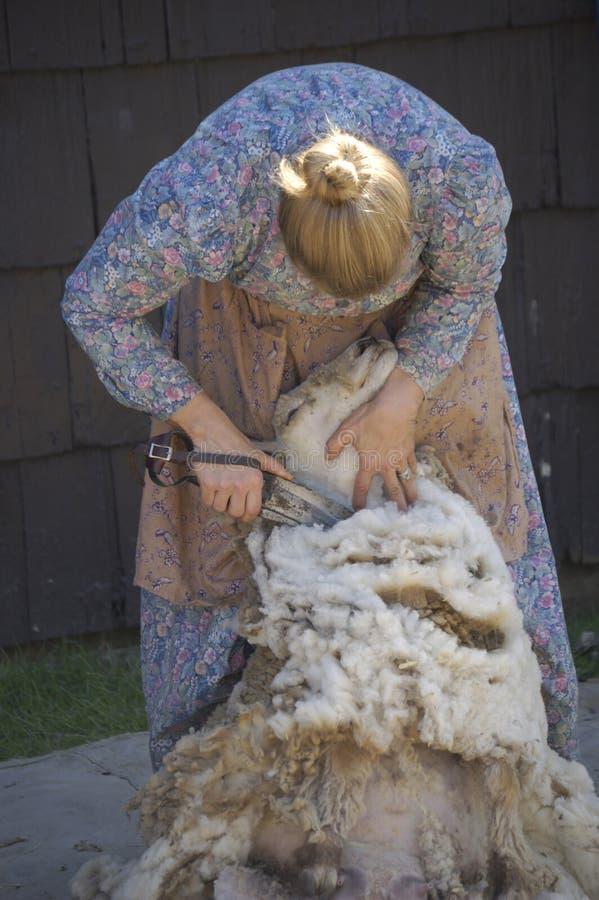 Moutons de tonte III images libres de droits