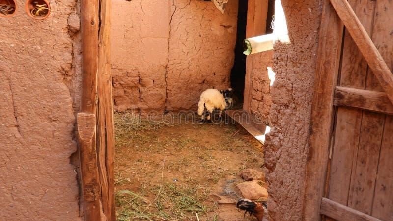Moutons et grange chez Kasbah Aît Ben Haddou, Maroc image libre de droits