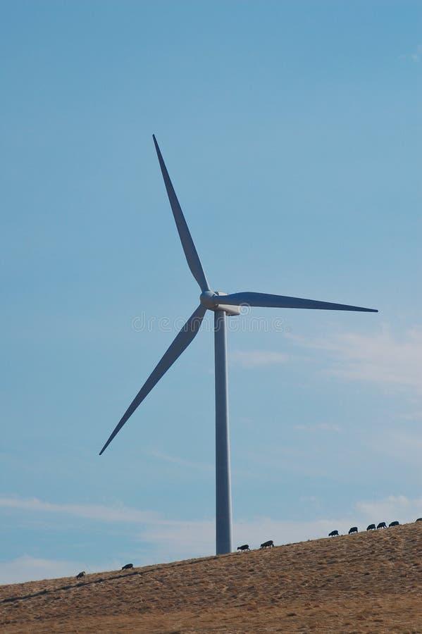 Moutons et moulin à vent images libres de droits