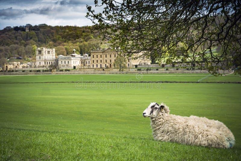 Moutons se reposant en raisons de maison majestueuse photos stock