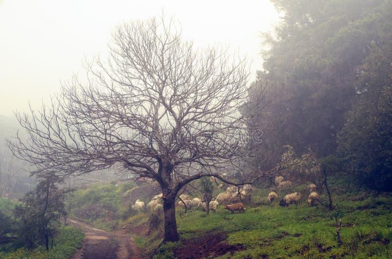 Moutons sous le brouillard photographie stock