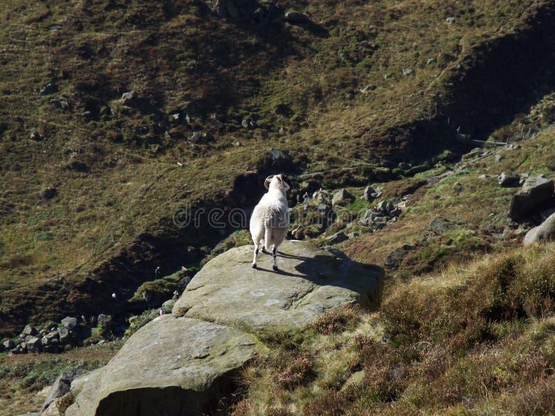 Moutons sur une roche photographie stock