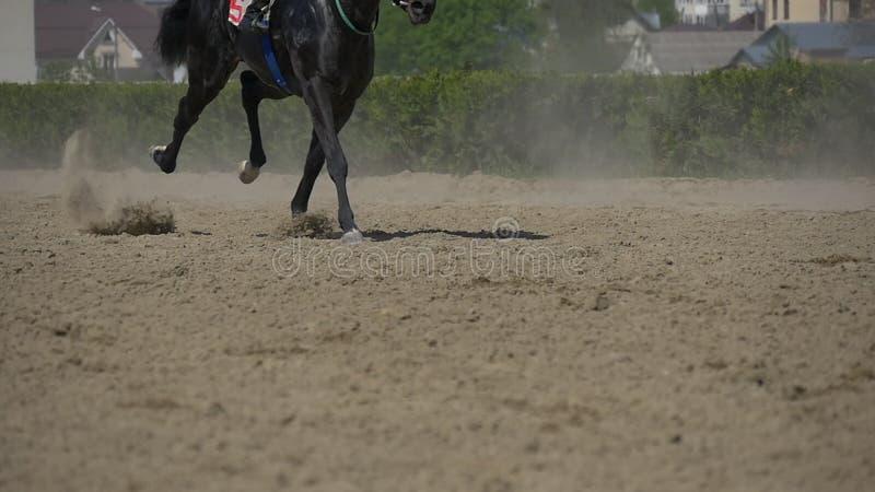 Mouvement lent de course de chevaux clips vidéos