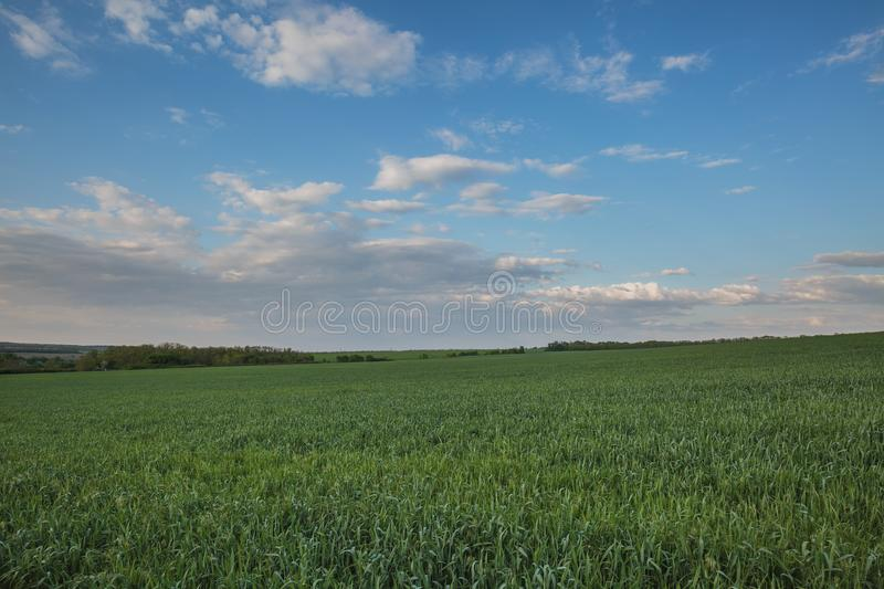The movement of the thunderclouds over the fields of winter wheat in early spring in the vast steppes of the Don. Russia. The movement of the thunderclouds over royalty free stock photography
