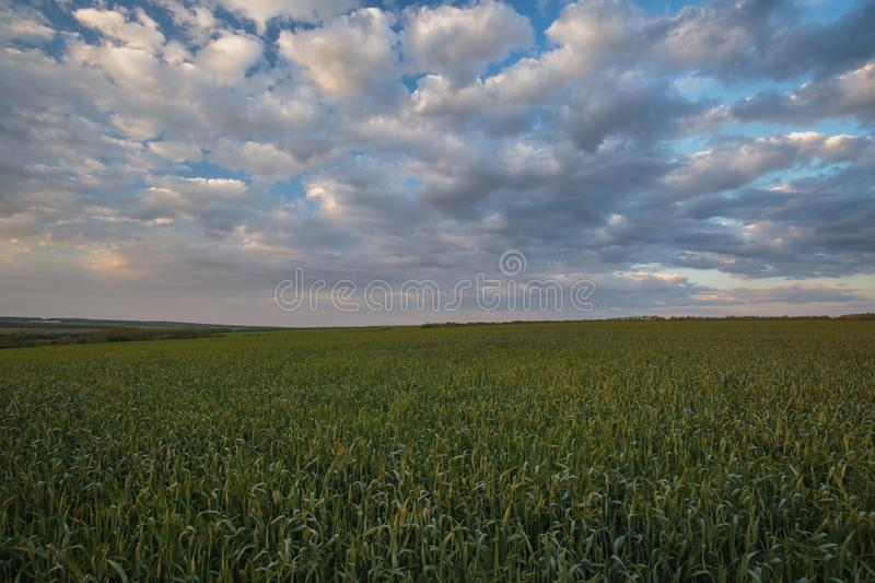 The movement of the thunderclouds over the fields of winter wheat in early spring in the vast steppes of the Don. Russia. The movement of the thunderclouds over stock photography