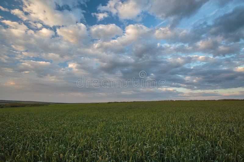 The movement of the thunderclouds over the fields of winter wheat in early spring in the vast steppes of the Don. Russia. The movement of the thunderclouds over royalty free stock image