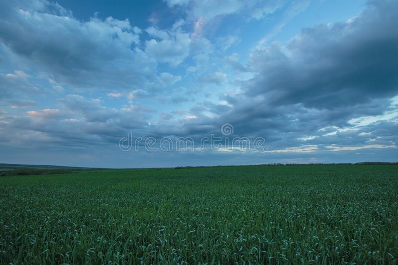The movement of the thunderclouds over the fields of winter wheat in early spring in the vast steppes of the Don. stock images